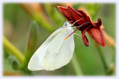 冒険広場に居た蝶