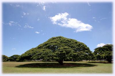 この木なんの木、気になる木