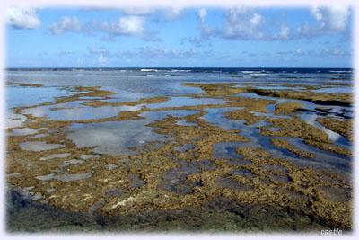 波照間島のタイドプール