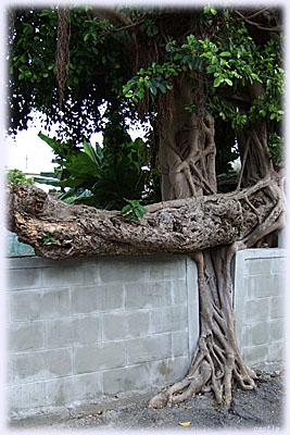 木に配慮した塀