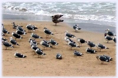 首をしまった海鳥たち