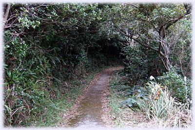 大瀬崎への道