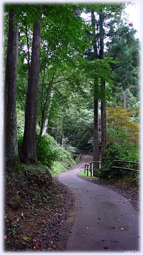 自然公園の小道