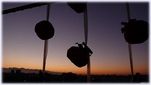朝晩の冷気に触れる柿