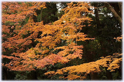 霧島神社、表参道の紅葉