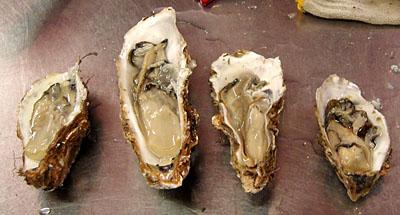 4種類の牡蠣